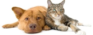 cat-and-dog- WeeklyAdPrices.com